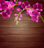 Pink orchid flowers on wooden background Stock Images