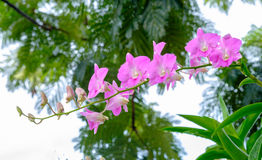 Pink orchid. In the garden after raining Royalty Free Stock Image