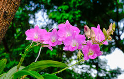 Pink orchid. In the garden after raining Stock Photo