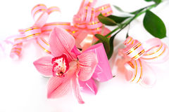 Pink orchid with gift wrappings Royalty Free Stock Photography