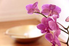 Pink Orchid and golden singing bowl Stock Image