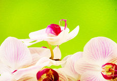 Pink orchid on green background Royalty Free Stock Images