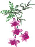 Pink orchid illustration Stock Photos
