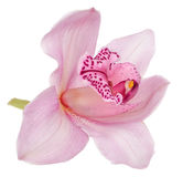 Pink orchid isolated on white Royalty Free Stock Photography