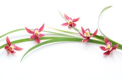 Pink orchid with leaf Stock Image