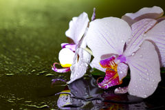 Pink orchid in night with water drop Royalty Free Stock Photo