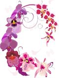 Pink orchid ornament Stock Photo