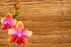 Pink orchid over wooden texture close-up Stock Photo