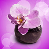 Pink orchid phalaenopsis flower in a vase Royalty Free Stock Photography