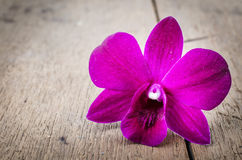Pink  orchid (Phalaenopsis ) Stock Photo