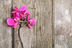 Pink orchid(Phalaenopsis ) Royalty Free Stock Images