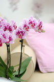 Pink orchid phaleanopsis in interior Stock Images