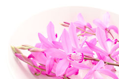 Pink orchid on plate Stock Image