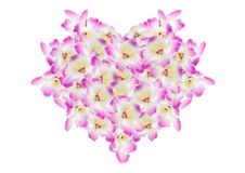Pink orchid. Purple orchid on white background Royalty Free Stock Photo