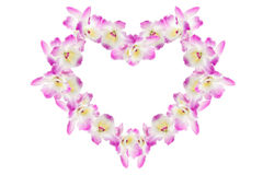 Pink orchid. Purple orchid on white background Stock Images