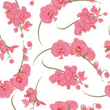 Pink orchid rococo seamless vector pattern Royalty Free Stock Images