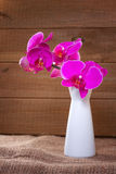 Pink orchid on a rustic background Stock Photo