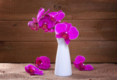 Pink orchid on a rustic background Stock Photos