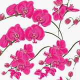 Pink orchid seamless vector pattern Royalty Free Stock Photo