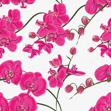 Pink orchid seamless vector pattern Stock Images