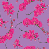 Pink orchid seamless vector pattern Royalty Free Stock Photos