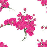 Pink orchid seamless vector pattern Stock Photography