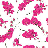 Pink orchid seamless pattern Stock Photos