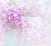 Pink orchid soft color and blur style. Stock Photos