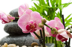 Pink orchid, stack of stones Royalty Free Stock Photos