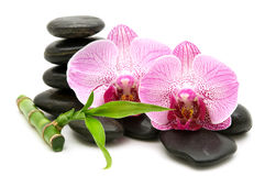 Pink orchid, stack of stones Stock Image