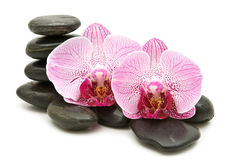 Pink orchid, stack of stones Royalty Free Stock Image