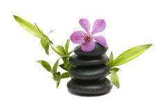 Pink orchid and stones. On the white background Stock Image