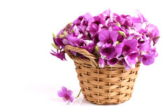 Pink orchid. In Thailand on a white background royalty free stock photo