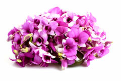 Pink orchid. In Thailand on a white background royalty free stock photos