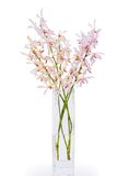 Pink orchid in vase Royalty Free Stock Photos