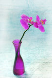 Pink orchid in vase Royalty Free Stock Photo