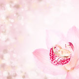Pink orchid and wedding rings Royalty Free Stock Photography