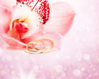 Pink orchid and wedding rings Stock Images