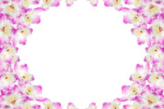 Pink orchid. On a white background Stock Images