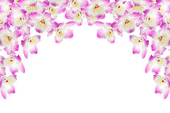 Pink orchid. On a white background Royalty Free Stock Images