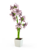 Pink orchid in a white flowerpot Royalty Free Stock Images