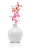 Pink orchid in white vase Royalty Free Stock Photos