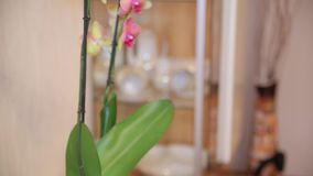 Pink orchid with yellow elements. Close up stock footage