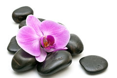 Pink orchid and zen Stones Stock Photo