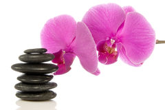 Pink orchid and zen stones Royalty Free Stock Image