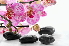 Pink orchid and zen Stones Royalty Free Stock Images