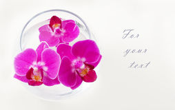 Pink orchids. Looking out of the vase Stock Image
