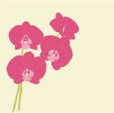 Pink orchids. Beautiful pink orchids in bloom with light yellow background Royalty Free Stock Images