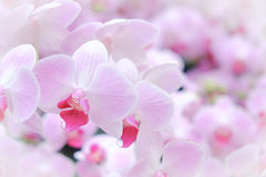 Pink orchids background Stock Images