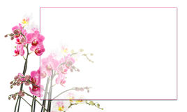 Pink orchids background. Pink orchids with a frame for your text Stock Image